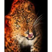 Леопард не доволен