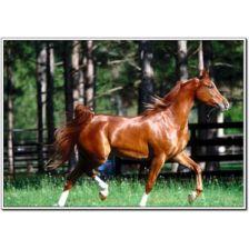 Алмазная вышивка набор Конь