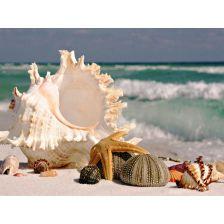 Ракушки на морском берегу