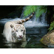 Алмазная вышивка набор Белый тигр